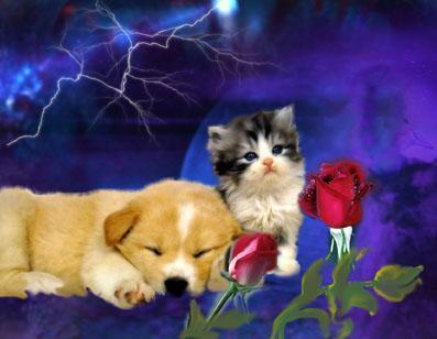 Chat et chien - Image de chat mignon ...